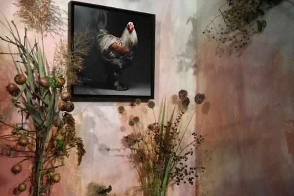 chicken_mostra-fiori-quadri-3