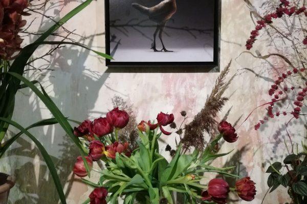 chicken_mostra-fiori-quadri-6
