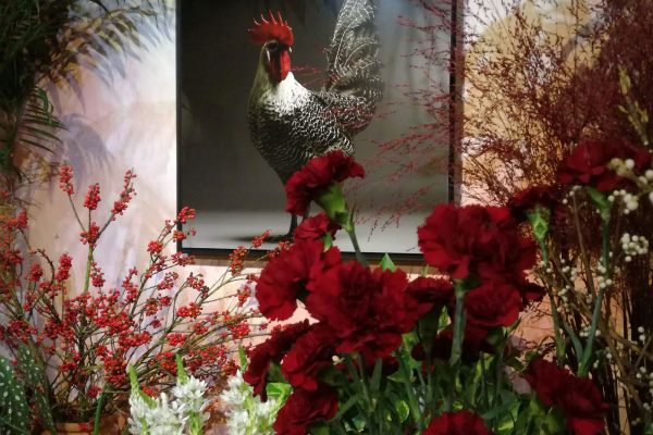 chicken_mostra-fiori-quadri-7