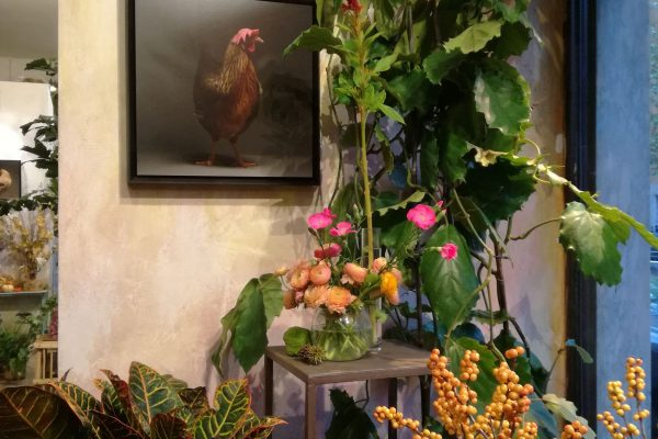 chicken_mostra-fiori-quadri-8